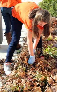 Freshmen Colleen Egan picks up leaves outside Trinity Hall Photo by Melissa Whelan